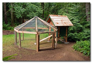 Chicken-Gazebo